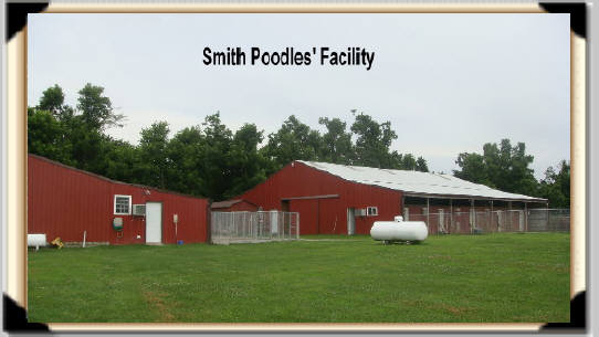 Poodle-Kennel-Facility2