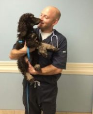 Poodle puppy check up visit