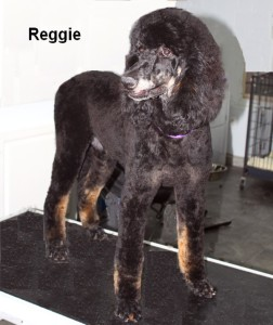 Reggie Our beautiful Phantom male, To Produce outstanding offspring from proven bloodlines!